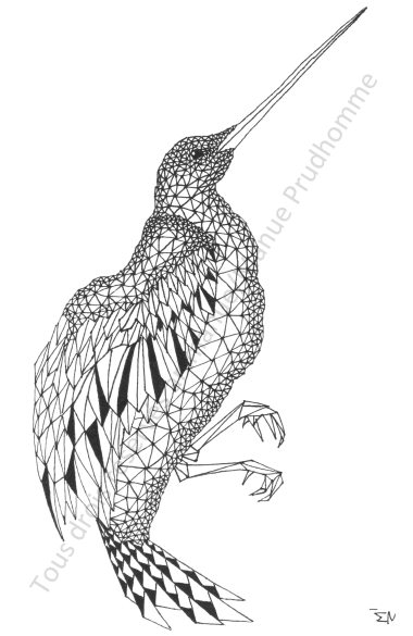 Bird-A5_Serie DELTA-manue prudhomme-artmanue
